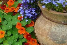 Pots, planters and hanging baskets