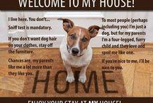 Pets n dogs n jrt