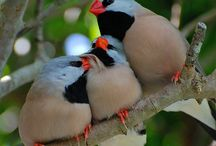 Feathered Friends / by Melany Fogel