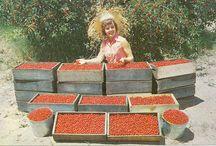 Country Girl Garden Blog
