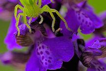 flowers / by Andrea Peeters
