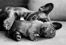 French Bulldogs 4 life ♡♥♡