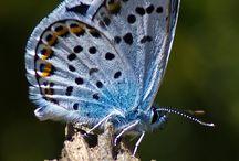 farfalle / raccolta di immagini di farfalle