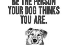 dogs,pets,animals