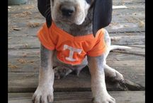 Little Vols / by UT Knoxville