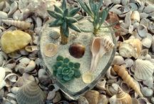 Plants / by Tina Moody
