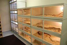 Snake terrarium ideas