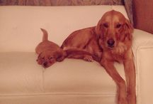 Amigos de 4 patas / Life dog