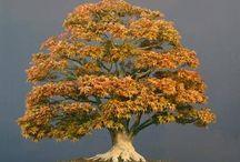 1 Bonsai tree