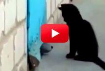 Kočky a psi videa