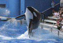 Against Whale Captivity! / Dolphins and such have no place inside a tank!