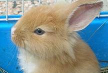 """PISOLO Coniglietta di ALBERTA. / Questa meravigliosa Creatura di Coniglietta è Pisolo : la foto della cucciola risale a circa 09 anni fà. È la """"Topolina"""" della mia migliore Amica : Alby, alla quale invio un calorosissimo saluto ; maddy.  (Ory)."""