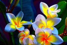 kwiatełki/flowers