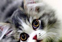 Γάτες και Σκύλοι - Cats & Dogs