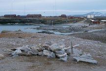Arctic islands  - Svalbard