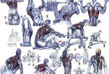 Anatomia Workout