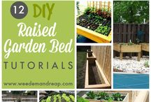 Garden ideas / by Molly Carney