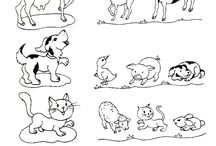 zvieratá a mládatá