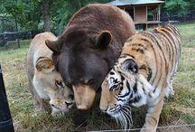 Animais - Natureza