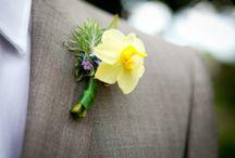 FIORI Narcisi / Daffodils