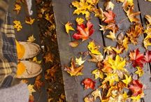 Season: autumn / Inspirational board with lovely and interesting lifestyle images related to autumn (fall) season.