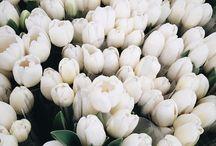 Flowers†