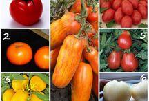 Rajčiny  druhy + sadenice
