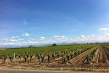 #FieldFridays / Beautiful images from Central Valley raisin growers vineyards.   / by California Raisins