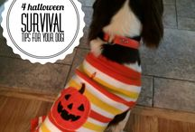 frisky for fall. / Dog treat recipes, diy's, tips and adorable autumn images.