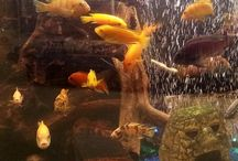 Tropical Fish at Northwest Seed & Pet / fish and accessories that you will find in our tropical fish departments at Northwest Seed & Pet