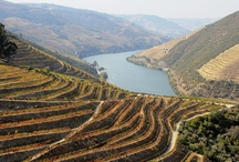 Douro & Trás-os-Montes / by Hideaway Portugal