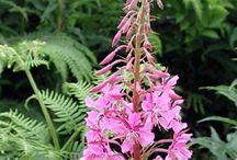 Edible and medicinal plants