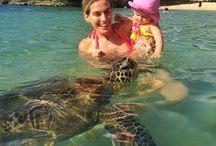 Hawaii Tours and Activities