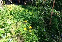 Gardenware Blog