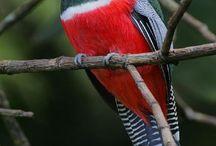 Birds / by Eugene Borg