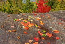 Autumn Fire / Fall foliage in the Adirondacks.