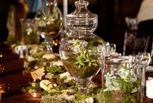 Wedding Ideas / by Nicole Zavouni