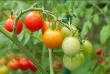 Növényvédelem termesztés gondozás