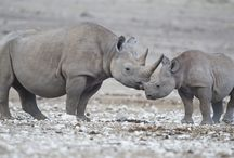Animals / Extinction