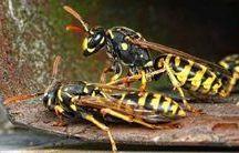 répulsif insecte