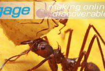 Science / Science is amazing! www.sciengage.com.au
