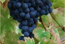 friend request / grapes you don't play with, but should / by grapefriend.com