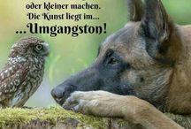 * #Niedliche Tiere - Cute Animals -  / Lustig - Funny
