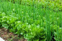 Jedlá zahrada