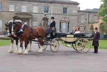 Arclid Carriage Company—Wedding Horse & Carriage