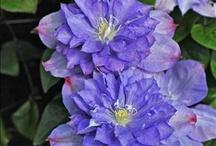 Climbing Plant Ideas for Your Garden / Our board for climbing plant ideas for your garden