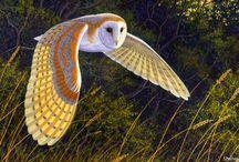 Owls / by Ann P