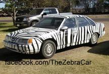 Zebras and Cheetahs OH MY! / by Ashley Bagley