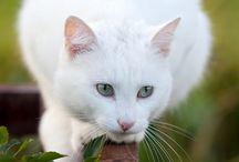 katter som ikke er på nettstallen