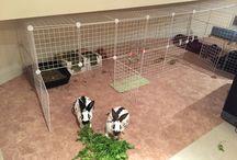 English Rabbits at home / My English Rabbits at home